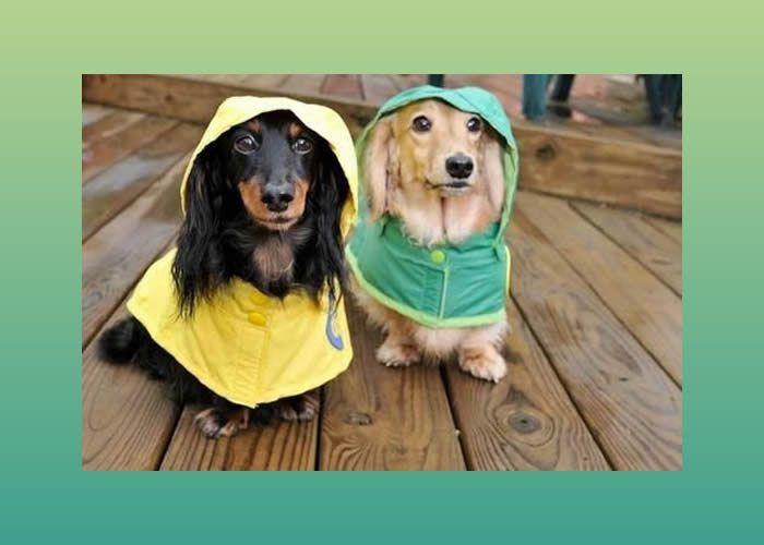 Que tal fazer uma capa de chuva para o seu cachorrinho? Esta é a dica que trouxemos para você! Com o