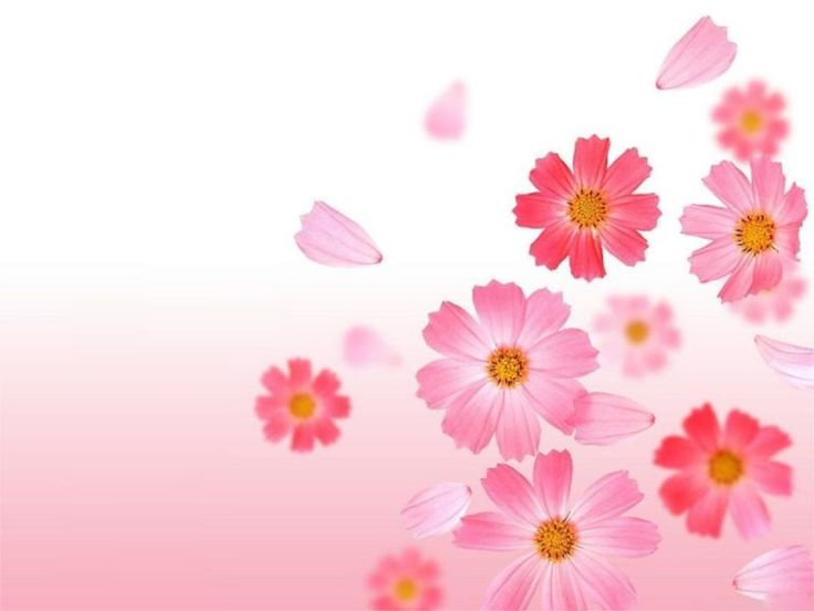 http://www.hotcurrentaffairs.com/get-it-set-it-flower-wallpaper/