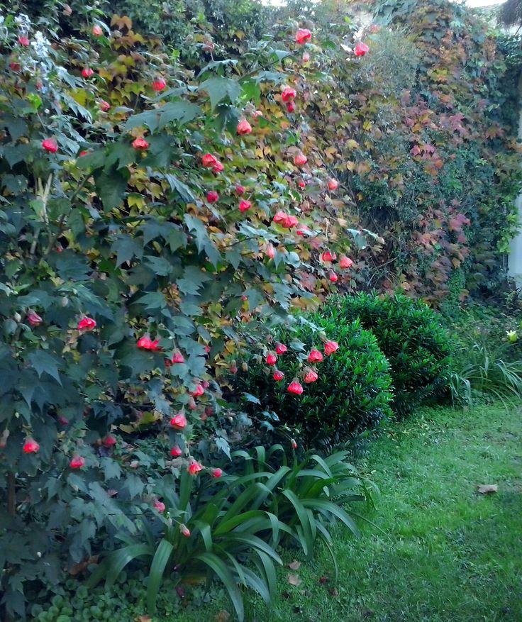 Jardin paisajista simple paisajistas diseo de jardines for Jardin paisajista