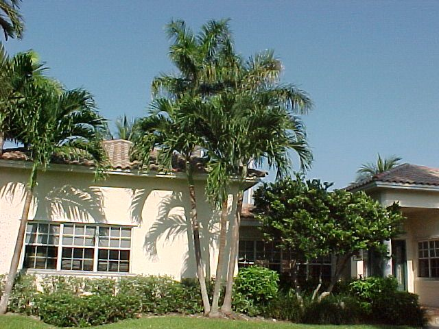 17 Best images about Palm landscaping on Pinterest ...