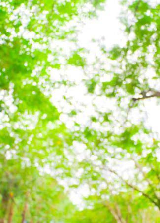 Image Result For Garden Blur Background Hd Background Images