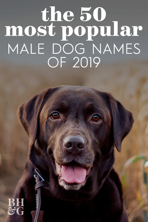 The 50 Most Popular Male And Female Dog Names Of 2019 Dog Names Female Dog Names Popular Dog Names