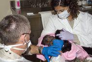 EE.UU. le realizan cesária a una gorila | NOTICIAS AL TIEMPO