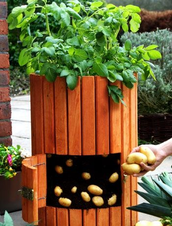 Grow your own.Think a veg patch is beyond the scope of your small garden? With container gardening you could even collect a regular potato crop. This wooden potato barrel is suitable for up to four plants, and the swing door at the front means you can harvest only a few at a time, as needed.