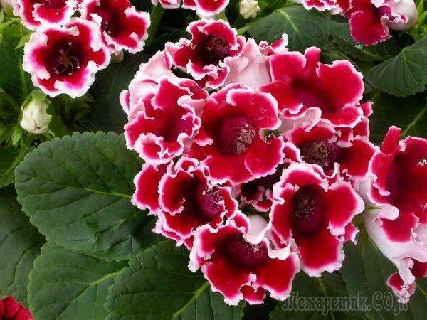 Стимулируем цветение у комнатных растений