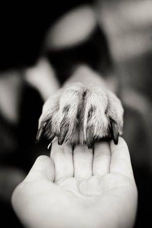 Fotoidee mit Ihrem Hund