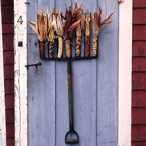 metal rake display: Decor Ideas, Pitch Forks, Indian Corn, Doors Decor, Decoration, Autumn, Decorating Ideas, Fall Decorating, Fall Wreaths
