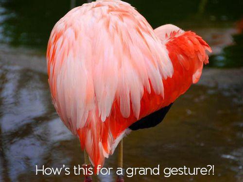 This flamingo stole our heart!  #JuniorExplorers #Meme