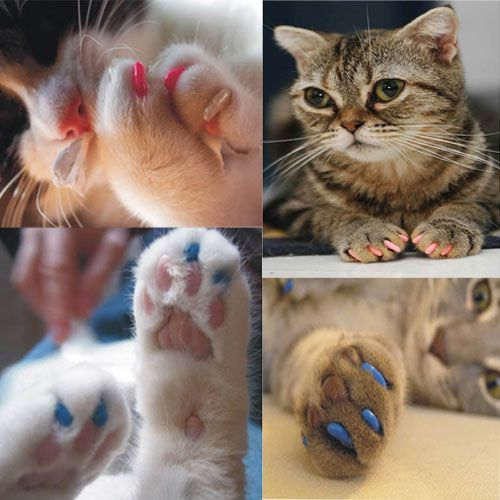 how to cut a kittens nails