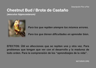 NaturaFlors: Chestnut Bud / Brote de Castaño