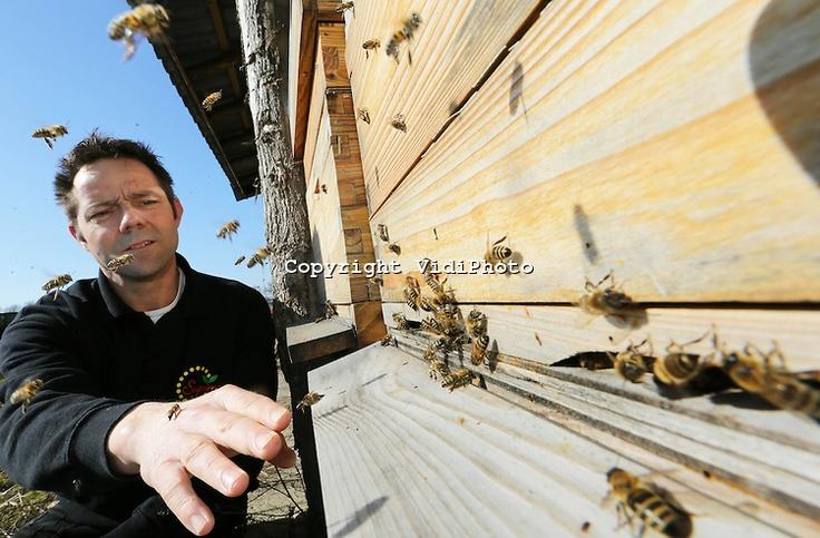 De honingbijen van imker en aardbeienteler Peter van de Ven @vennenhof uit het Brabantse St. Michielsgestel vliegen maandag voor het eerst massaal naar buiten. Na een lange winter moeten de dieren hun poep kwijt tijdens een zogenoemde reinigingsvlucht. Dat gebeurt als de temperatuur tot boven de 8 graden is gestegen. Van de Ven is blij dat alles zes bijenvolken de lange winter hebben overleefd. De bijen zijn namelijk nodig om straks de aarbeienbloesem te bestuiv