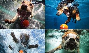 Pictures of cute dogs leaping into water after the ball is thrown! <3