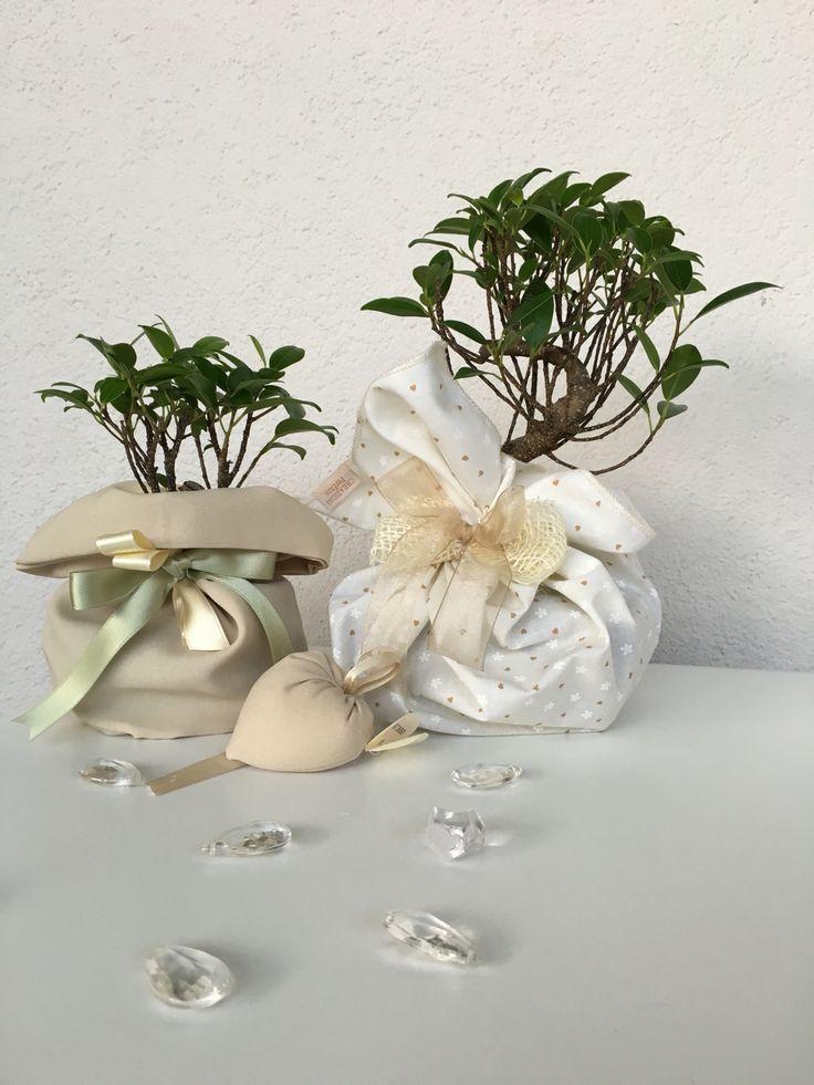 Bomboniere con bonsai @vogliadibonsai