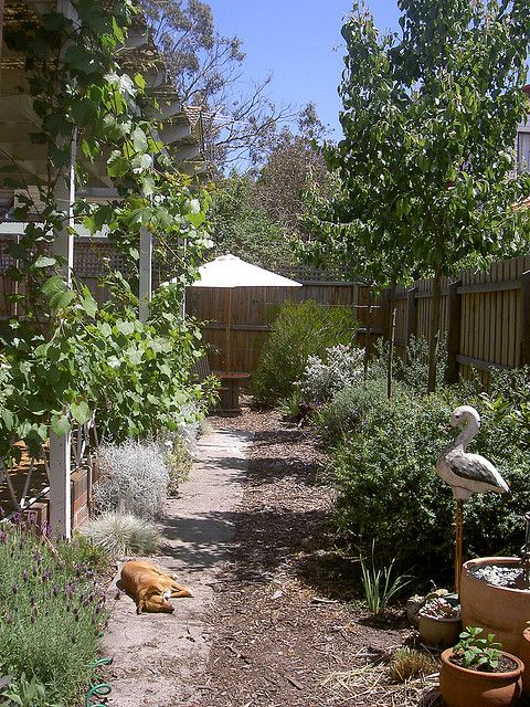 Garden inspiration using Australian native plants