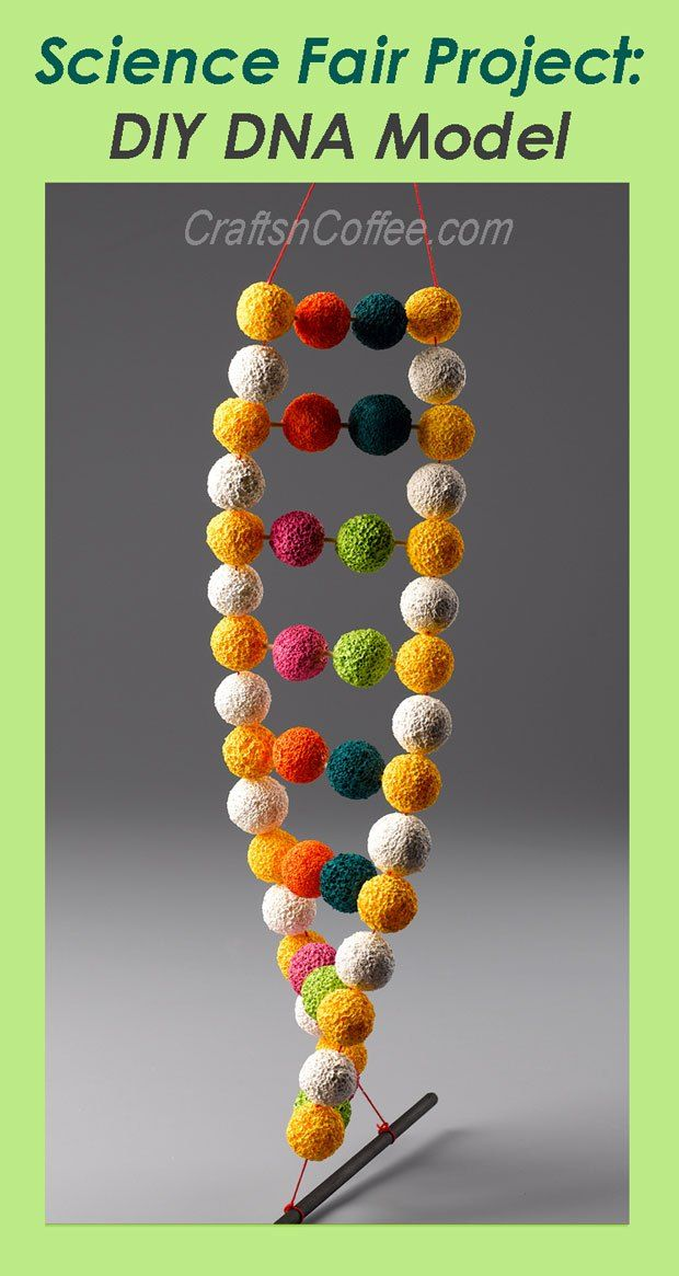 Best 25 dna project ideas on pinterest dna model project dna how to make a double helix dna model for a ccuart Images