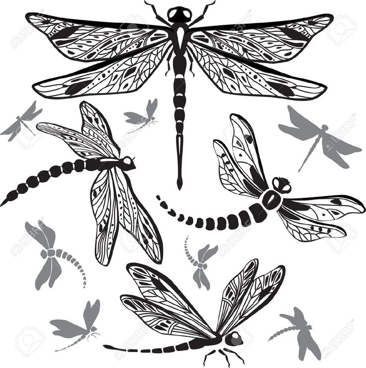 Dragonfly Cliparts, Stock Vector And Royalty Free Dragonfly ...