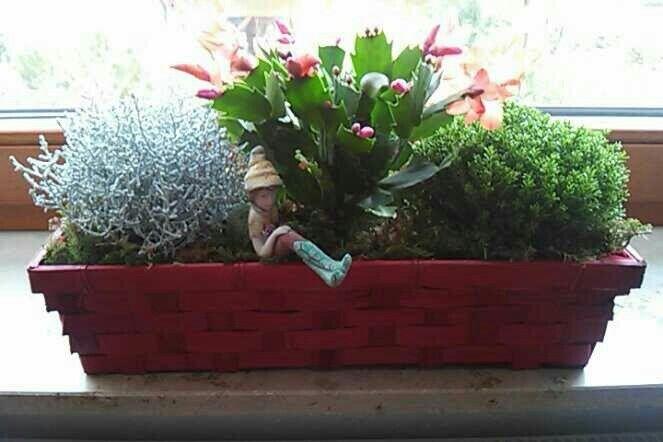 Mein Blumenelf ist zu Hause