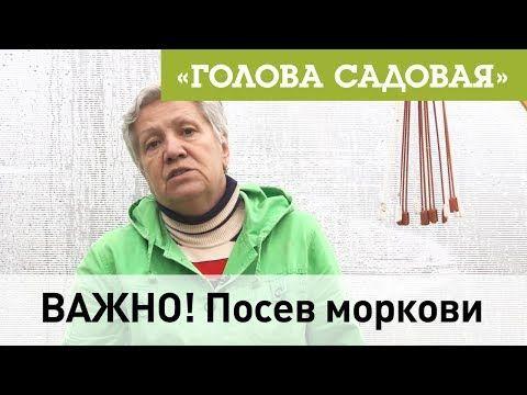 Голова садовая - ВАЖНО! Посев моркови - YouTube