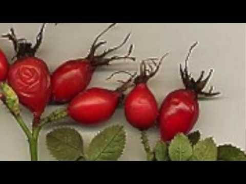 Aceite reafirmante de escaramujo - YouTube