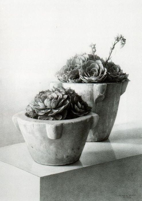Claudio Bravo (Chilean, 1936-2011), Succulents, 1995
