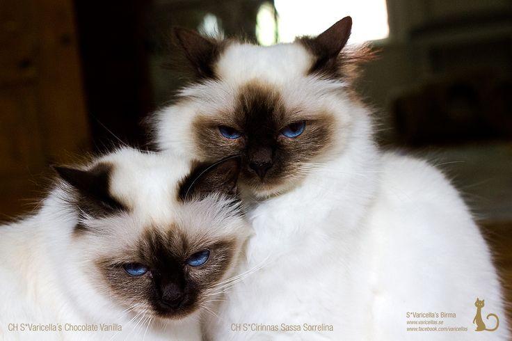 Sassa & Vanilla, mother and daughter <3