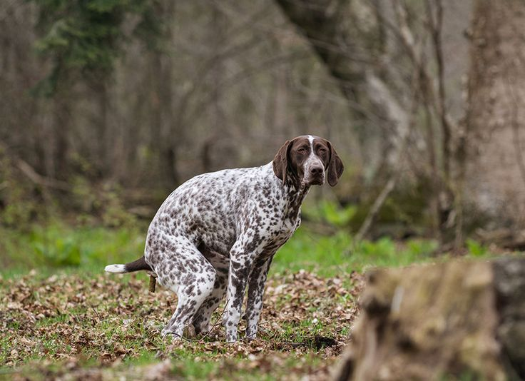 House-training an adult dog - it's really not that difficult, people!!!