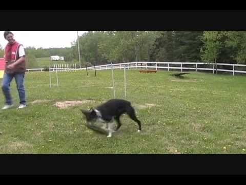 Cesar Millan Beginning Of Dog Training