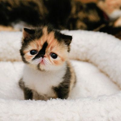 Cutest cat on pinterst?