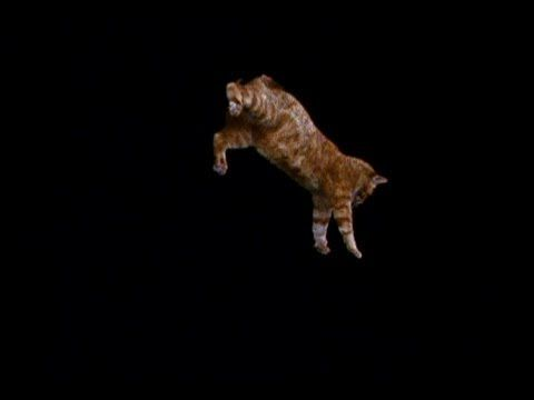 Do cats always land on their feet? High-speed photography shows us the answer.