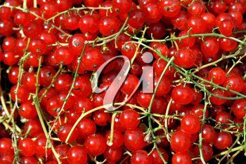 Redcurrant berries closeup background