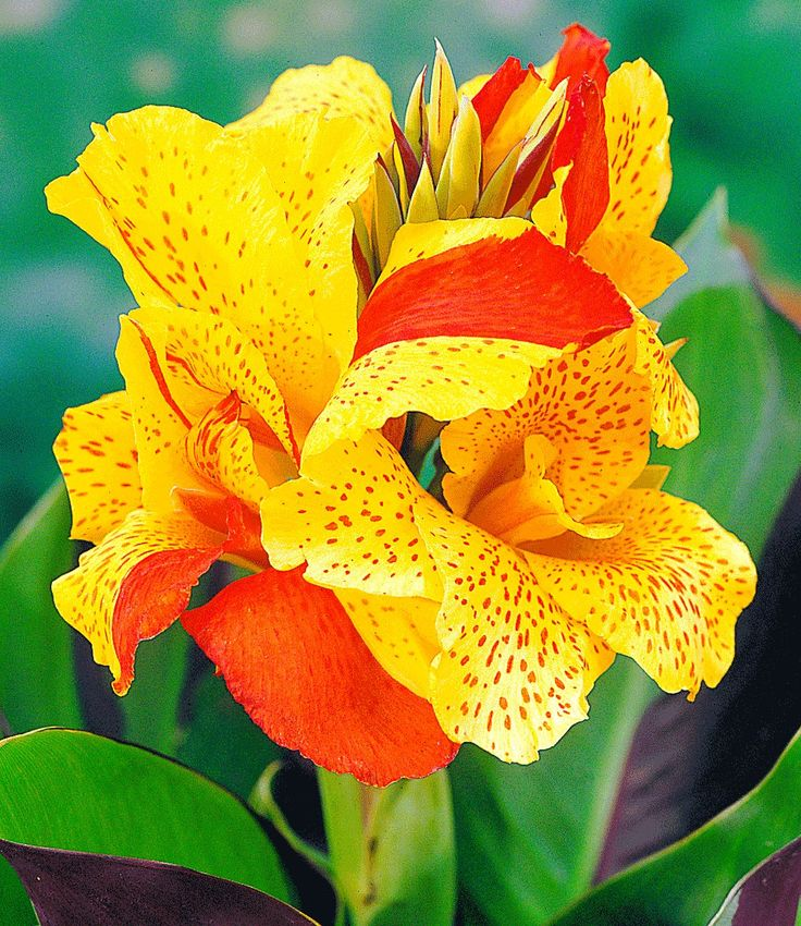 17 best ideas about tropische pflanzen on pinterest   tropische