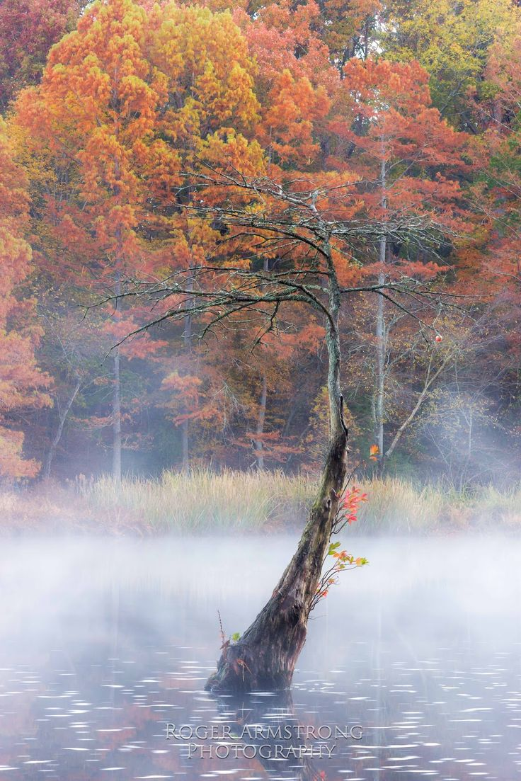 beaver's bend | Roger Armstrong Photography: Fall Color @ Beavers Bend