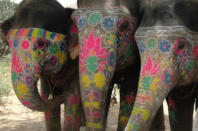 Imagine how else you can beautify and elephant. It's beautiful enough on its own. Pretty ~ @Elephanti App App