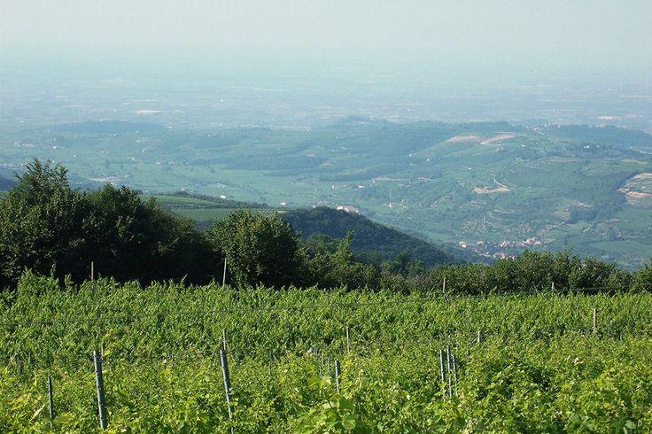 Vini ed Oli prodotti ad Illasi nelle colline di Verona | TENUTA LE LUCI