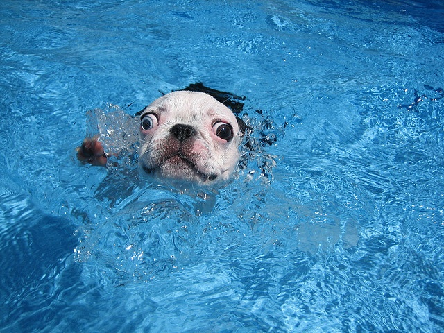 I´m a dogfish..... I hate water..... and I love water