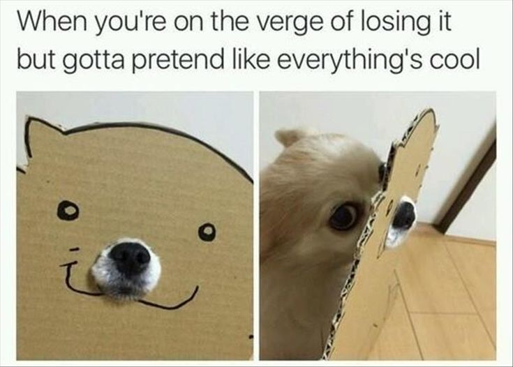 Best For The Dogs Images On Pinterest Dogs Funny Dogs And - 26 pets who got stuck but keep pretending everythings ok 5 cracked me up