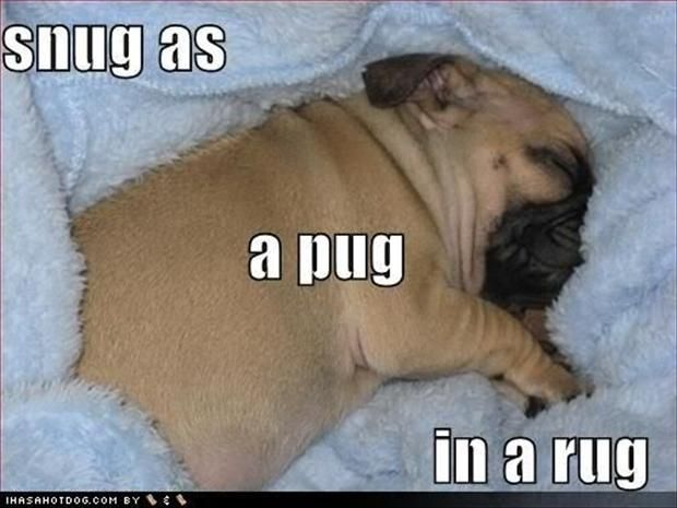 snug as a pug in a rug