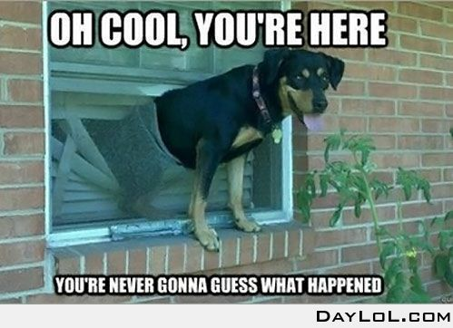 BahahaLaugh, Funny Dogs, Old Dogs, Dogs Memes, Funny Stuff, Humor, Funny Photos, Screens Doors, Animal Memes