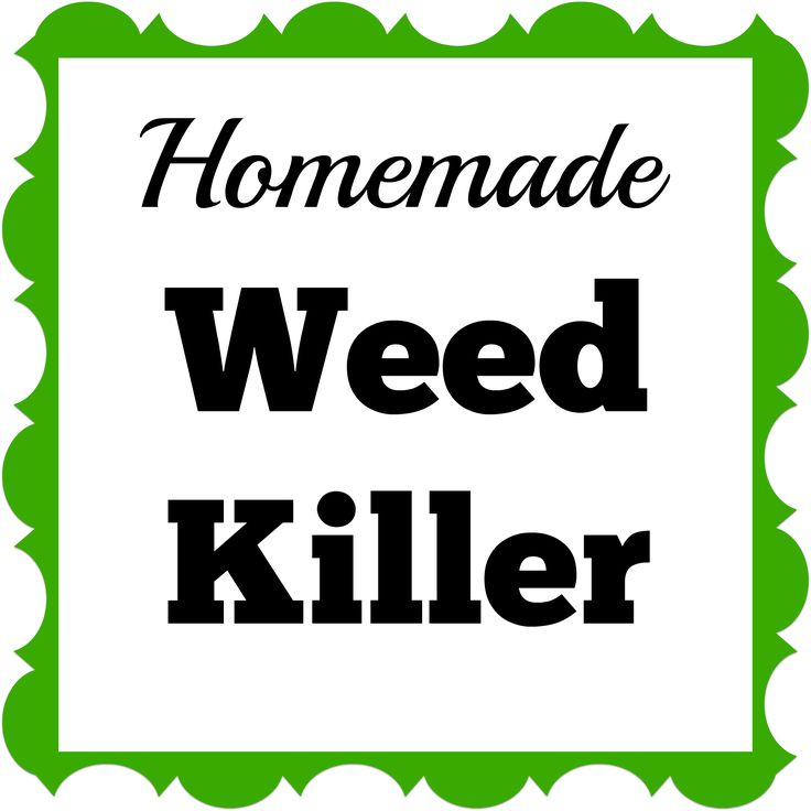Great Homemade Weed Killer