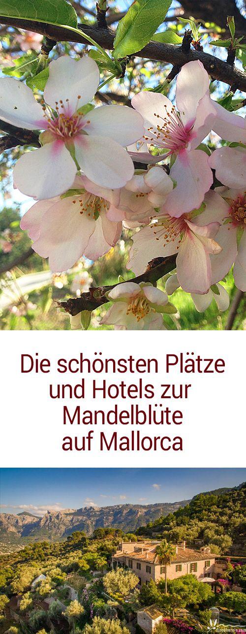 Zur Mandelblüte nach Mallorca. Die schönsten Hotels & Fincahotels und Routen zur Mandelblüte. Ausflugstipps für den Urlaub im Frühling auf Mallorca.