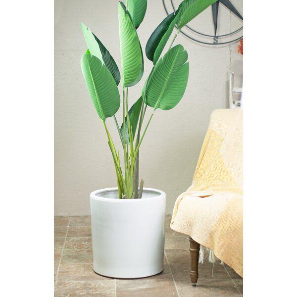 Wilhelm Ceramic Pot Planter Planter Pots Ceramic Pot Bedroom Plants Decor