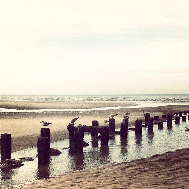 Seagulls on Blackpool beach