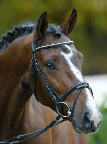 Chequille Z 1999 Zangersheide branded stallion.