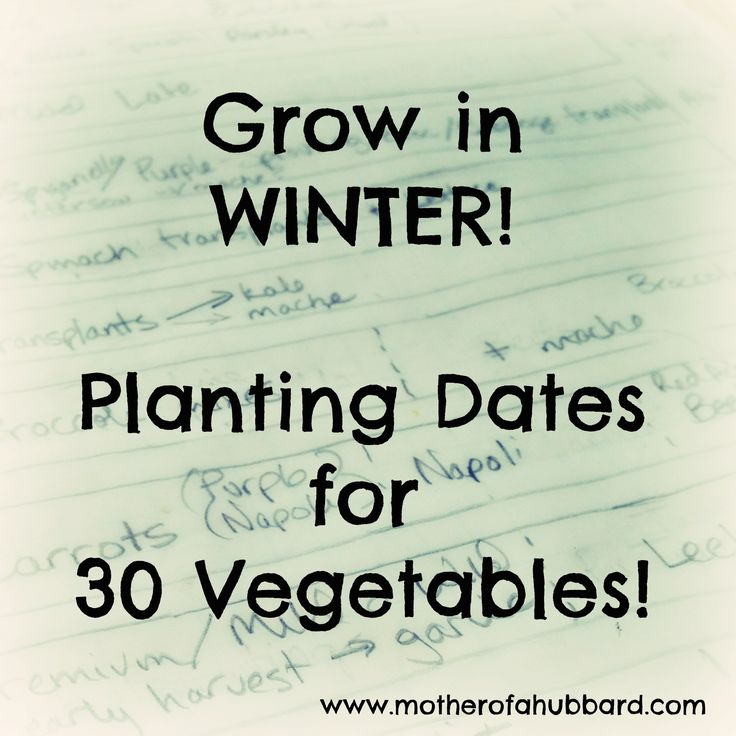 """Do you know what youcould be planting now, for eating in February? Or have you considered that some varieties ofkale or cabbage are more cold-tolerant than others? """"What to plant"""" and """"when to pl..."""