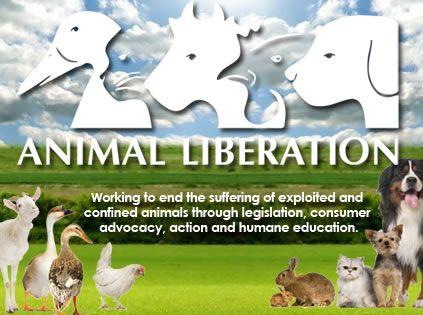 Exposed: Yelmah Piggery, South Australia - Animal Liberation NSW   Exposing Cruelty to Animals