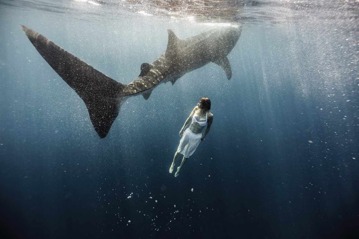 Into the Deep: Tyler Stableford's hauntingly beautiful shark images