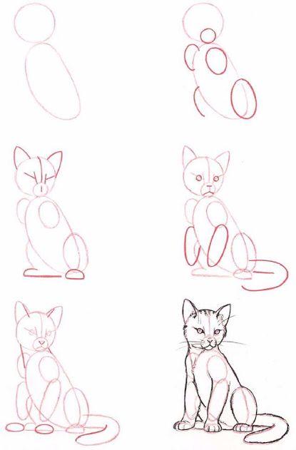 Een kat