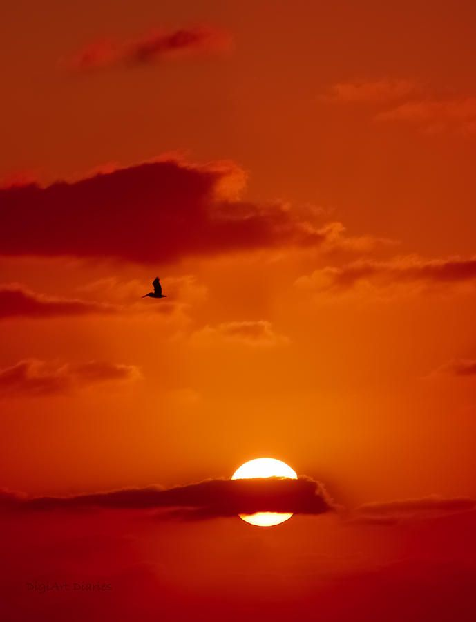 Sunrise at Cape Canaveral, Florida. A pelican takes flight in search for his morning meal