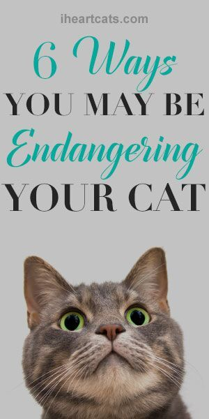 Cat Maintenance Log: Notebook For Animal Lovers | Cat, Dog, Hamsters & More | Record Food Diet, Track Veterinarians Visits & More | Medium Size Paperback | 6 Months Handbook, Monitoring Book