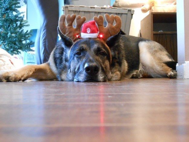 This tired reindeer. | 21 Animals Who Are Totally Nailing This Whole Christmas Thing